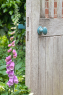 stock-photo-25374361-secret-garden-entrance